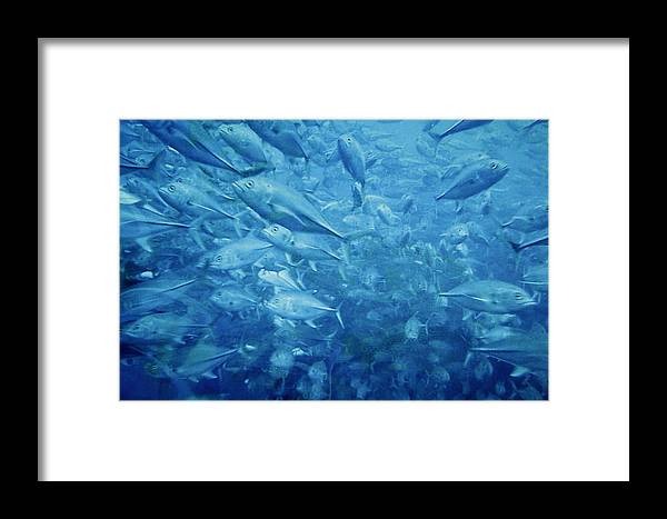 Fish Framed Print featuring the photograph Fish Schooling Harmonious Patterns Throughout The Sea by Christine Till