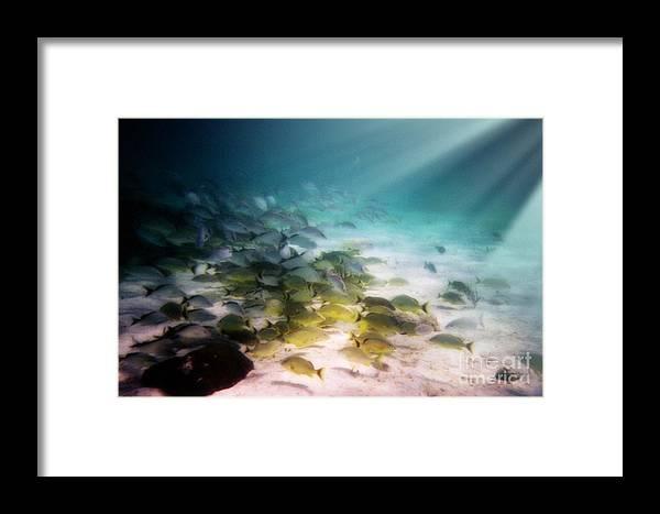Fish School Framed Print featuring the digital art Fish Swim In The Light by Sven Brogren