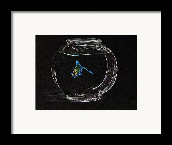 Fish Framed Print featuring the photograph Fishbowl by Tim Allen