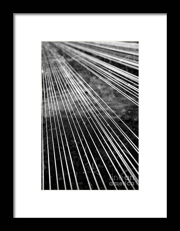 Abstract Framed Print featuring the photograph Fishing Lines by Gaspar Avila