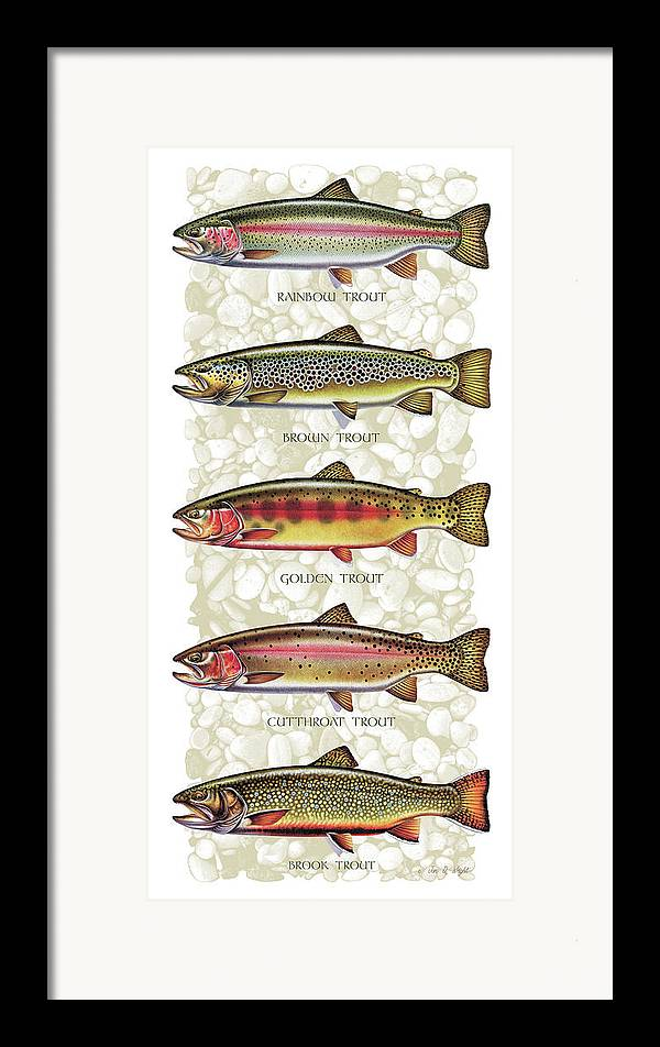 Five Trout Panel Framed Print featuring the painting Five Trout Panel by JQ Licensing