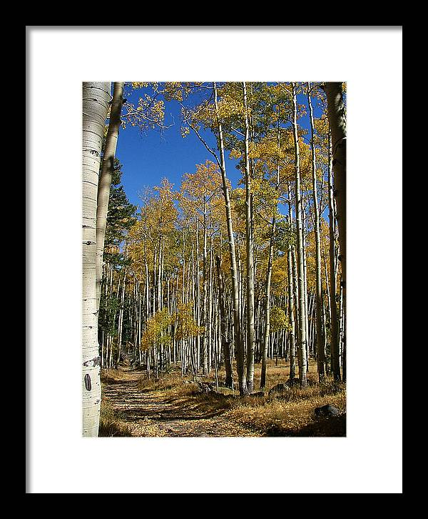Aspen Prints Framed Print featuring the photograph Flagstaff Aspens 799 by Mary Dove