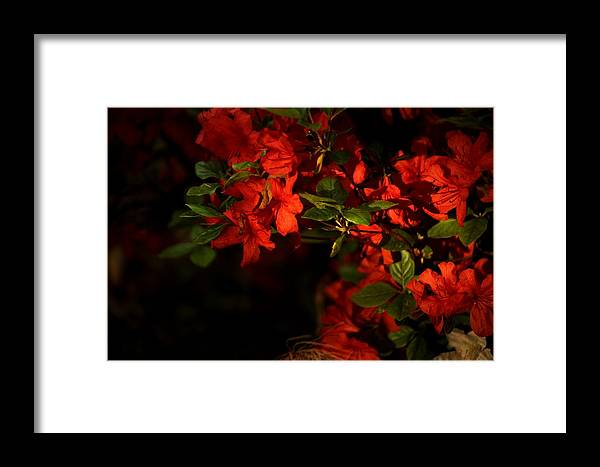 Framed Print featuring the photograph Flame by Dervent Wiltshire