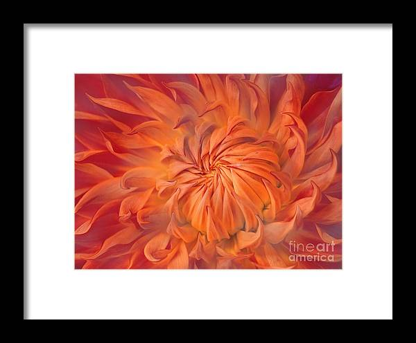 Flower Framed Print featuring the photograph Flame by Jacky Gerritsen