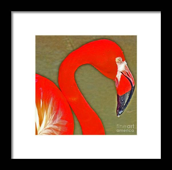 Flamingo Framed Print featuring the photograph Flamingo 3 by David Frederick