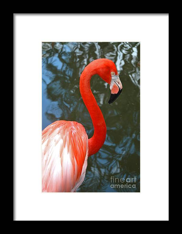 Flamingo Framed Print featuring the photograph Flamingo In Profile by Allan Einhorn