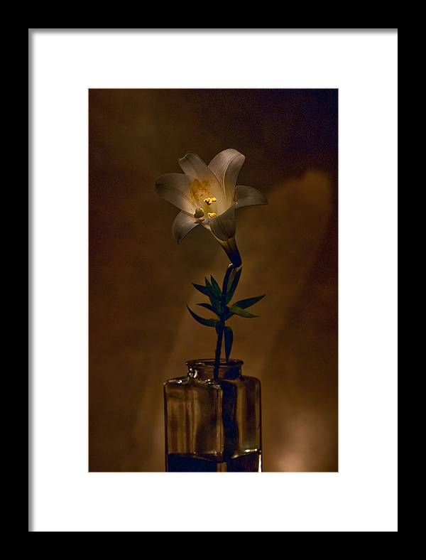 Flower Framed Print featuring the photograph Flashlight Series Easter Lily 4 by Lou Novick