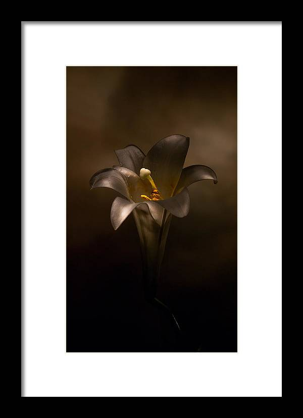 Flower Framed Print featuring the photograph Flashlight Series Easter Lily 6 by Lou Novick