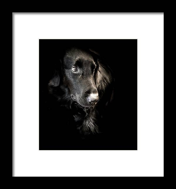 Dog Framed Print featuring the photograph Flat Coated Retriever by Allin Sorenson