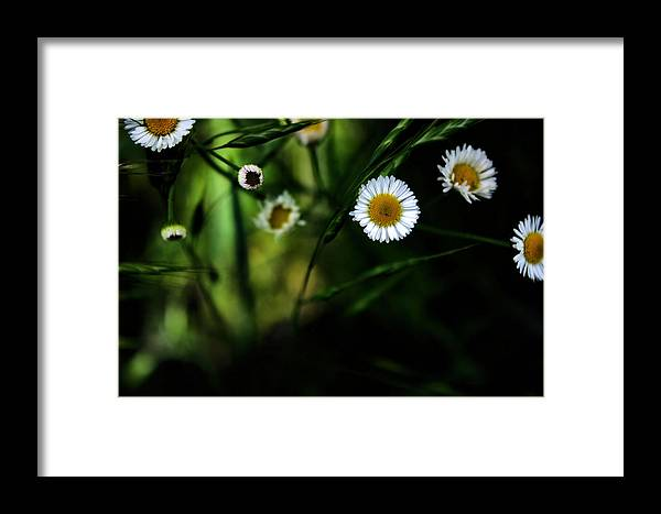 Texas Wildflower Framed Print featuring the photograph Flea Bane by Gulf Island Photography and Images