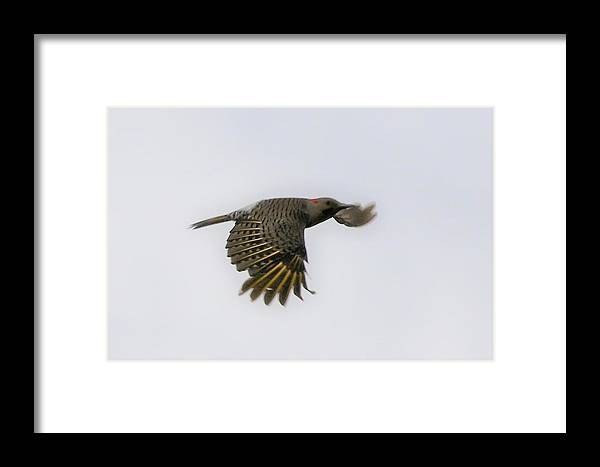 Flicker Framed Print featuring the photograph Flicker by Debbie Storie
