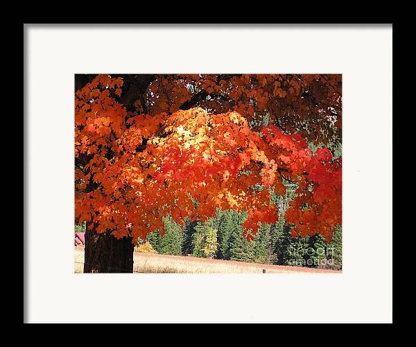 Autumn Photographs Framed Print featuring the photograph Flickering Sunlight by Louise Magno
