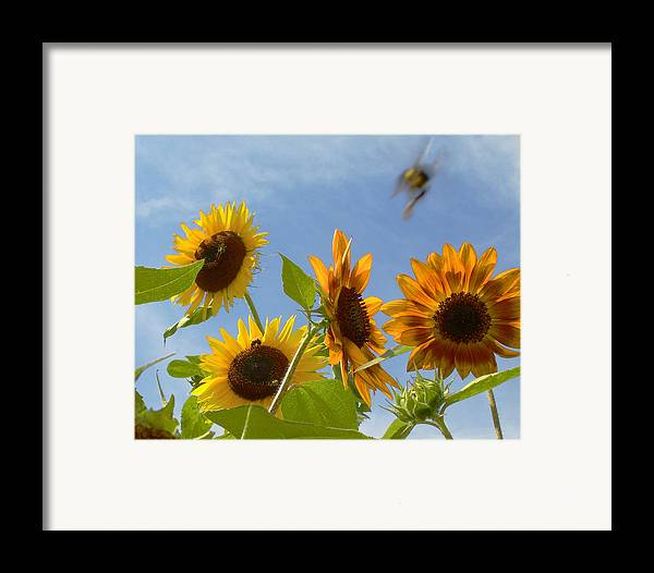 Bee Framed Print featuring the photograph Flight Of The Bubble Bee by Julie Geiss