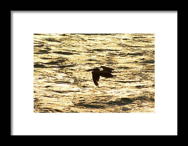 Bird Framed Print featuring the photograph Flight Of The Pelican by Andreas Freund