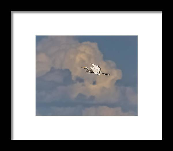 Great Egret Framed Print featuring the photograph Flight To Heaven by Yeates Photography