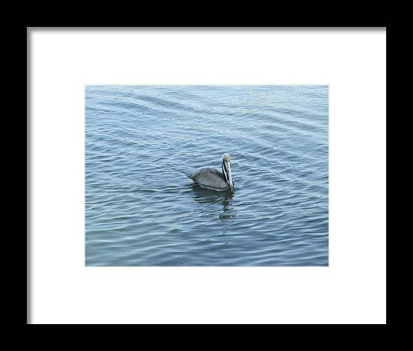 Pelican Framed Print featuring the photograph Floater by Ted Putman