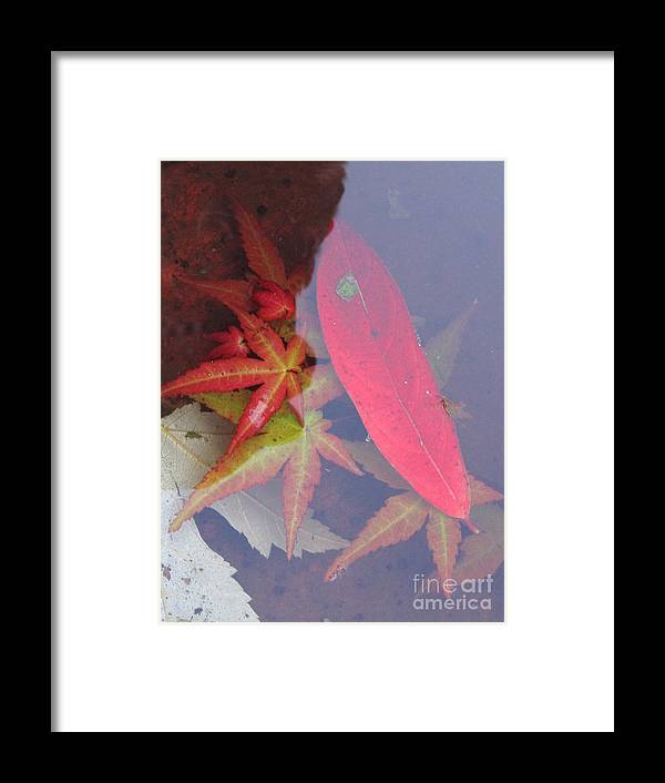 Photography Framed Print featuring the photograph Floating by Addie Hocynec