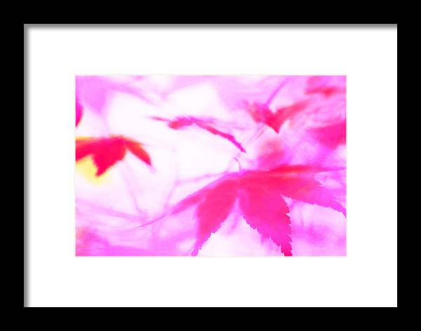 Leaves Framed Print featuring the photograph Floating Hearts 3 by Gary Bartoloni