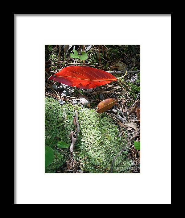Summer Framed Print featuring the photograph Floating Leaf by Beebe Barksdale-Bruner