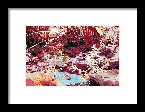 Koi Framed Print featuring the photograph Floating Lilies Pads Above The Koi. by Judy Loper