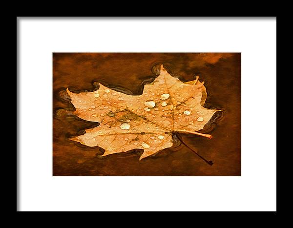 Maple Leaf Framed Print featuring the photograph Floating Maple Leaf Pnt by Theo O'Connor