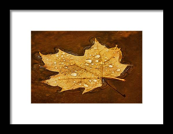 Maple Leaf Framed Print featuring the photograph Floating Maple Leaf Txt by Theo O'Connor