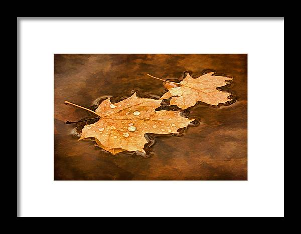 Maple Leaf Framed Print featuring the photograph Floating Maple Leaves Pnt by Theo O'Connor