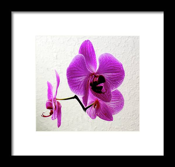 Orchid Framed Print featuring the photograph Floating Orchid by Francesco Roncone