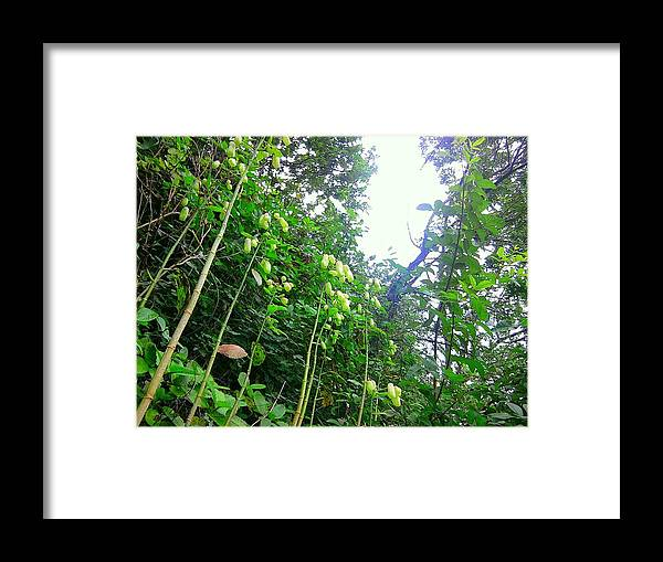 Rainforest Framed Print featuring the photograph Floating Peanuts by Charles Jennison