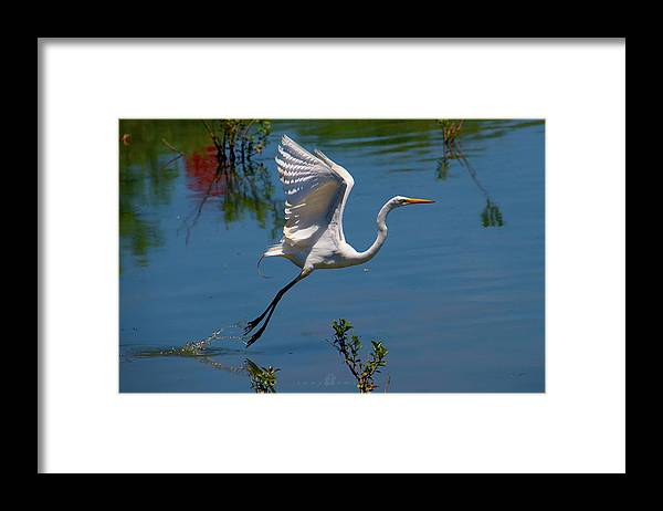 Framed Print featuring the photograph Floating by Tony Umana