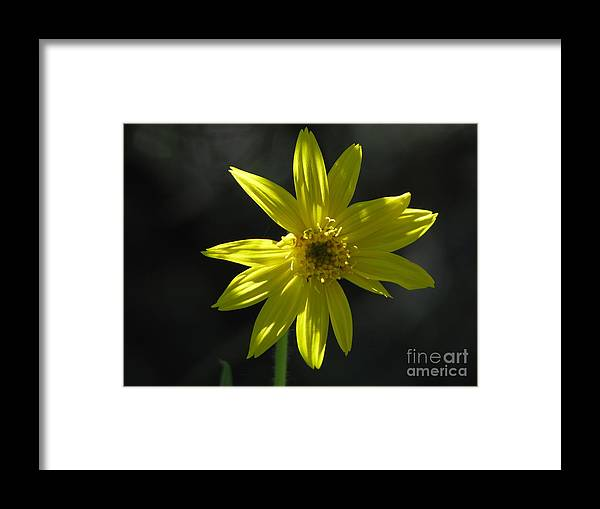 Light Framed Print featuring the photograph Floral by Amanda Barcon