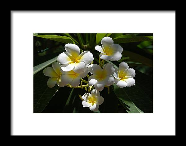 Nature Framed Print featuring the photograph Floral Beauties by Rob Hans