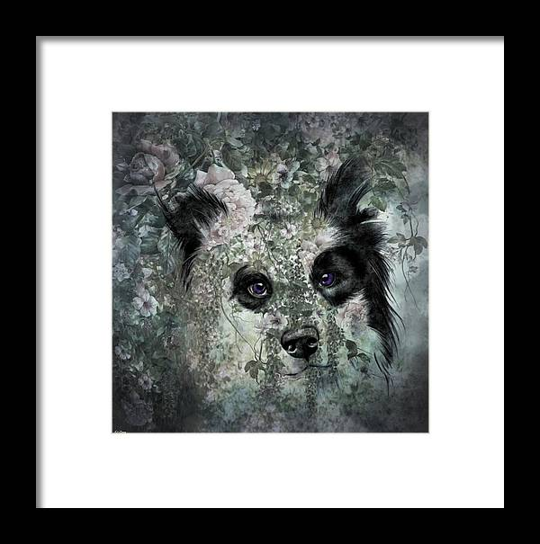 Border Collie Framed Print featuring the mixed media Floral Border Collie by G Berry