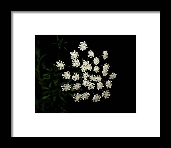 Floral Framed Print featuring the photograph Floral Fireworks by Debbie May