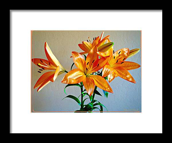 Flowers Framed Print featuring the photograph Floral Impression by Barbara Zahno