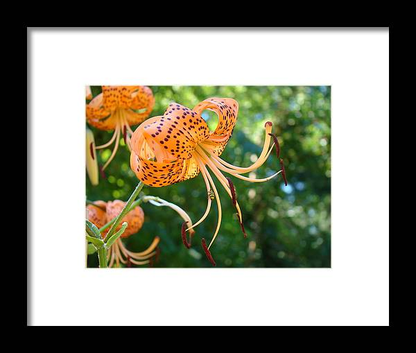Lilies Framed Print featuring the photograph Floral Tiger Lily Flower Art Print Orange Lilies Baslee Troutman by Baslee Troutman