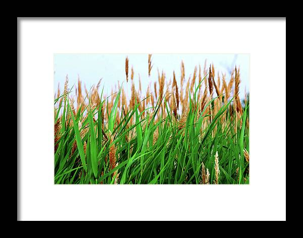 Framed Print featuring the photograph Floral2 by Charles Willis