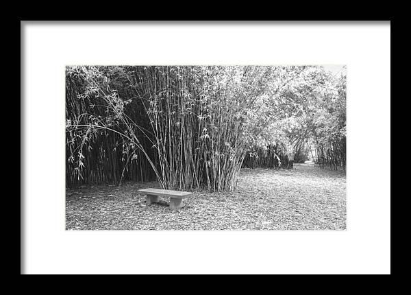 Garden Framed Print featuring the photograph Florida Garden Scene_010 by Pat Canova