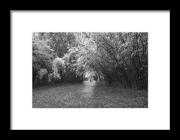 Garden Framed Print featuring the photograph Florida Garden Scene_011 by Pat Canova