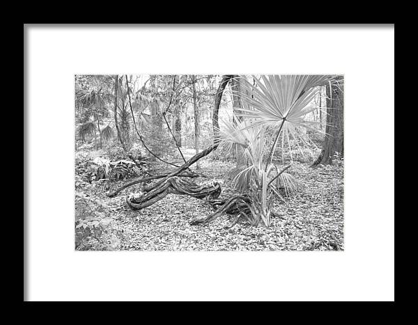 Garden Framed Print featuring the photograph Florida Garden Scene_012 by Pat Canova