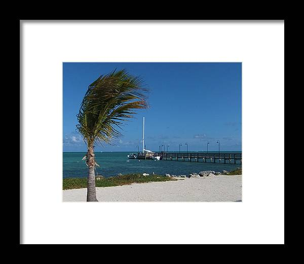 Palm Tree Framed Print featuring the photograph Florida Keys by Maria Keady