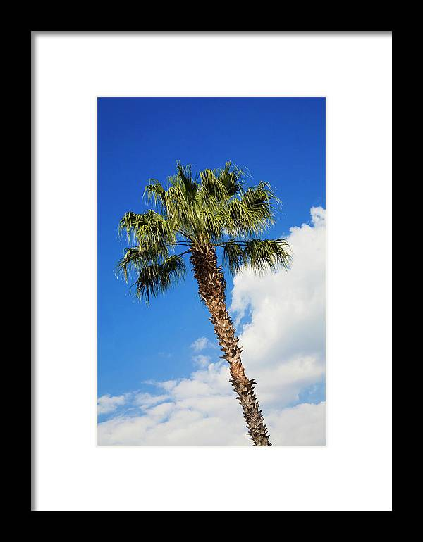 Florida State Tree Framed Print featuring the photograph Florida State Tree by Diane Macdonald