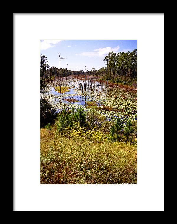 Wetland Framed Print featuring the photograph Florida Wetland by Nicole I Hamilton
