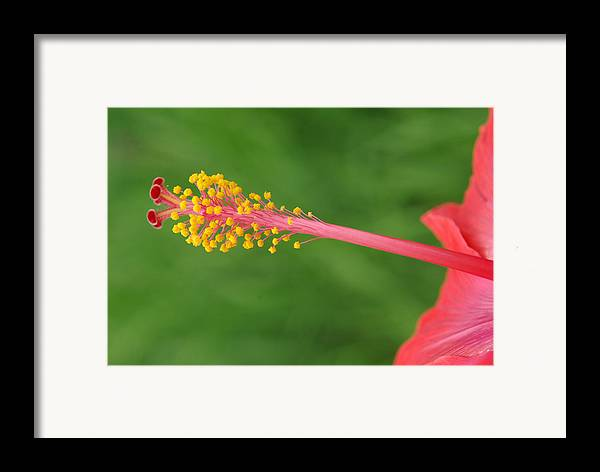 Nature Framed Print featuring the photograph Flower 5 by Eric Workman