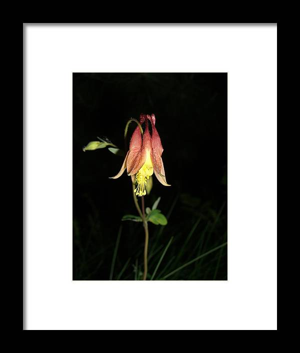 Flower Framed Print featuring the photograph Flower by Amanda Kabat