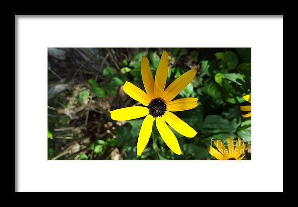 Flower Framed Print featuring the photograph Flower by Ashley Mollett