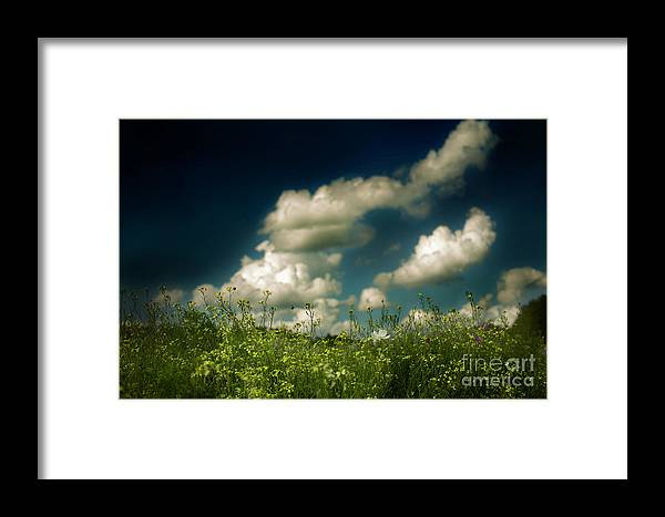 Landscape Framed Print featuring the photograph Flower Fields By Roadside by Lacey Renae Butler