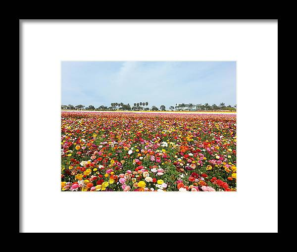 Flower Framed Print featuring the photograph Flower by Hitomi Yamauchi