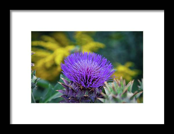 Flower Framed Print featuring the photograph Flower in Fayetteville Courthouse Square by Toni Hopper