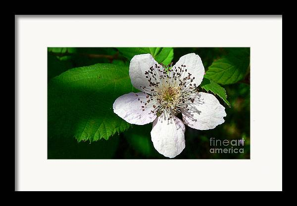 Flower Framed Print featuring the photograph Flower In Shadow by Larry Keahey